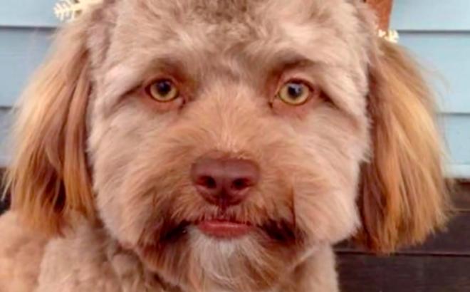 Sống cạnh con người khiến loài chó chịu khổ rất giỏi, và chúng biết 'ghen tuông'!