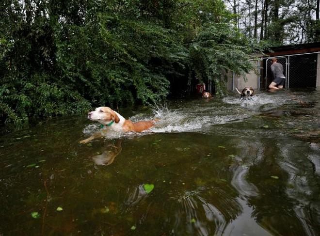 Ảnh: Bờ Đông nước Mỹ tan hoang, nước không ngừng dâng cao do bão Florence - Ảnh 12.
