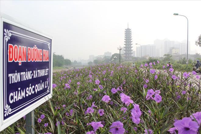Đẹp ngỡ ngàng với con đường hoa tím bên dòng sông Tô Lịch - Ảnh 4.