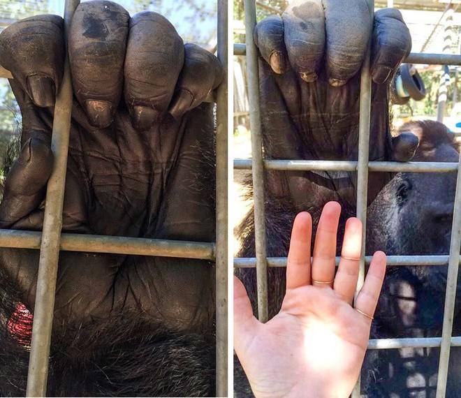 Những bức hình sẽ giúp bạn hiểu thế giới tự nhiên ngập tràn các loài vật khổng lồ mà bản thân không nhận ra - Ảnh 8.