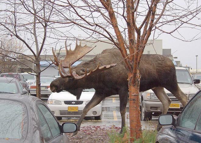 Những bức hình sẽ giúp bạn hiểu thế giới tự nhiên ngập tràn các loài vật khổng lồ mà bản thân không nhận ra - Ảnh 9.