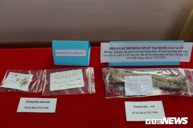 Ảnh: Xương người tiền sử trong hang động núi lửa được phát hiện ở Đắk Nông - Ảnh 11.
