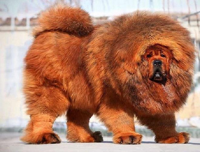 Những con vật đắt nhất thế giới (phần 2) - Ảnh 5.