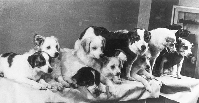 Những chú chó nổi tiếng của nước Nga - Ảnh 5.