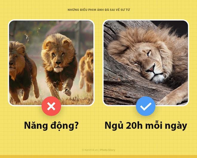 Chào! Tôi là sư tử và phim ảnh của loài người các ông làm sai hết cả rồi - Ảnh 5.