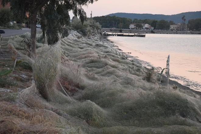 Bờ biển Hi Lạp bị mạng nhện khổng lồ bao phủ, dân mạng bấn loạn đòi đốt sạch trước khi lũ nhện sinh sôi nảy nở - Ảnh 1.