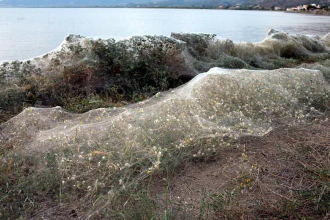 Bờ biển Hi Lạp bị mạng nhện khổng lồ bao phủ, dân mạng bấn loạn đòi đốt sạch trước khi lũ nhện sinh sôi nảy nở - Ảnh 6.
