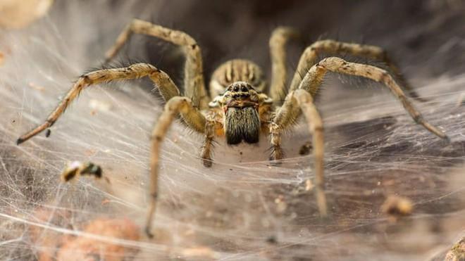 Bờ biển Hi Lạp bị mạng nhện khổng lồ bao phủ, dân mạng bấn loạn đòi đốt sạch trước khi lũ nhện sinh sôi nảy nở - Ảnh 8.