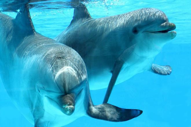 6 sự thật chứng minh thế giới động vật sẽ không khi nào khiến chúng ta thôi ngạc nhiên - Ảnh 2.
