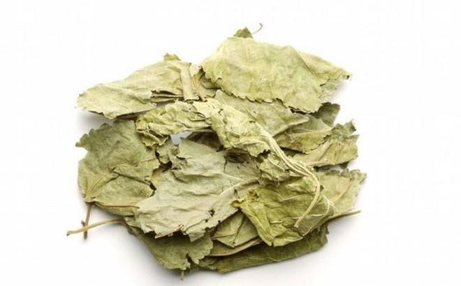 Kỳ diệu chiếc lá nhỏ trong vườn Việt: Thanh nhiệt, giải độc, sạch mạch máu, tiêu sưng viêm - Ảnh 2.