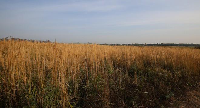 Hành trình ấn tượng của TH: Từ đồng cỏ hoang vu tới nhà máy sữa công suất lớn nhất nước Nga - Ảnh 1.