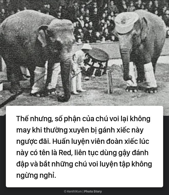 Câu chuyện chấn động thế giới: Chú voi trong rạp xiếc bị treo cổ vì giết người da trắng - Ảnh 2.