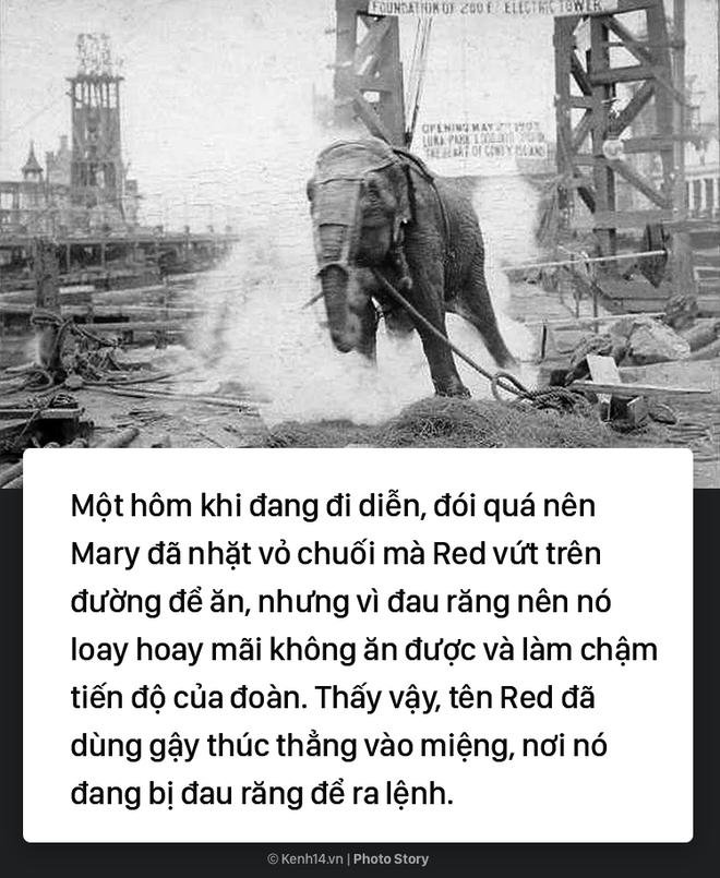 Câu chuyện chấn động thế giới: Chú voi trong rạp xiếc bị treo cổ vì giết người da trắng - Ảnh 3.