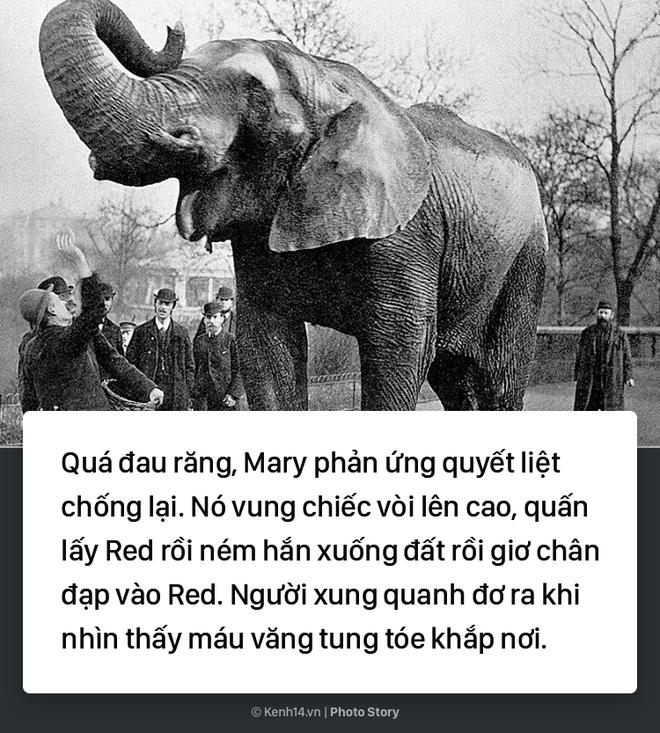 Câu chuyện chấn động thế giới: Chú voi trong rạp xiếc bị treo cổ vì giết người da trắng - Ảnh 4.