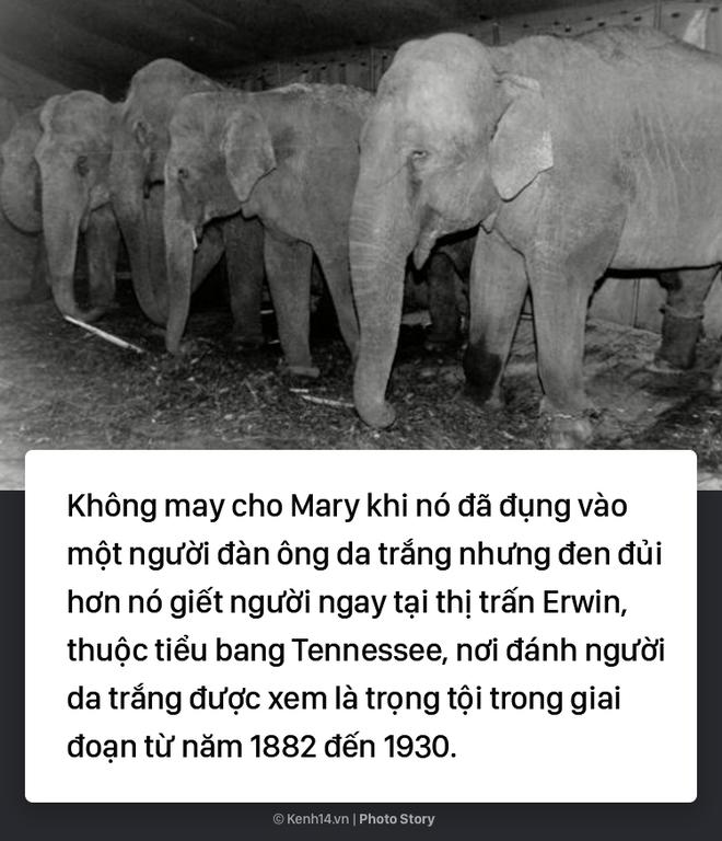 Câu chuyện chấn động thế giới: Chú voi trong rạp xiếc bị treo cổ vì giết người da trắng - Ảnh 5.
