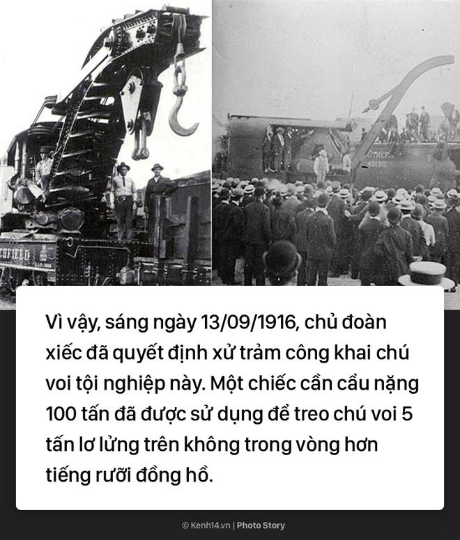Câu chuyện chấn động thế giới: Chú voi trong rạp xiếc bị treo cổ vì giết người da trắng - Ảnh 6.
