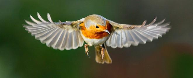 Chim chóc có thể nhìn thấy từ trường, nhưng đến bây giờ con người mới hiểu được tại sao - Ảnh 2.