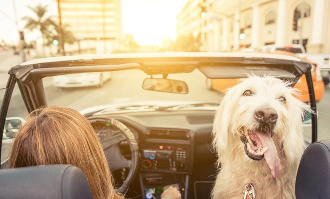 8 việc không nên làm khi đặt chân lên xe ô tô: Điều thứ 3 các bà vợ hay mắc nhất! - Ảnh 7.