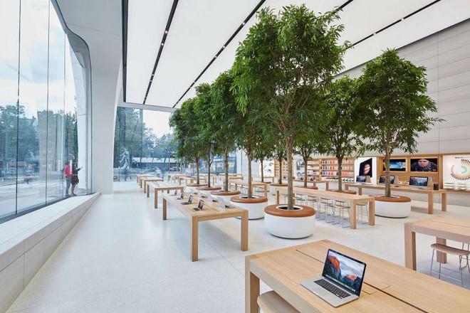 Bí mật khiến ai cũng phải bất ngờ về những chiếc bàn gỗ trong tất cả cửa hàng Apple Store - Ảnh 2.
