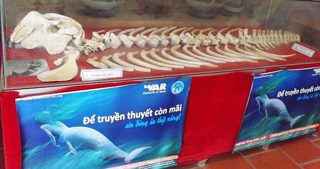 Đau lòng chuyện ăn thịt nàng tiên cá dưới biển để... sung mãn ở Phú Quốc - Ảnh 3.
