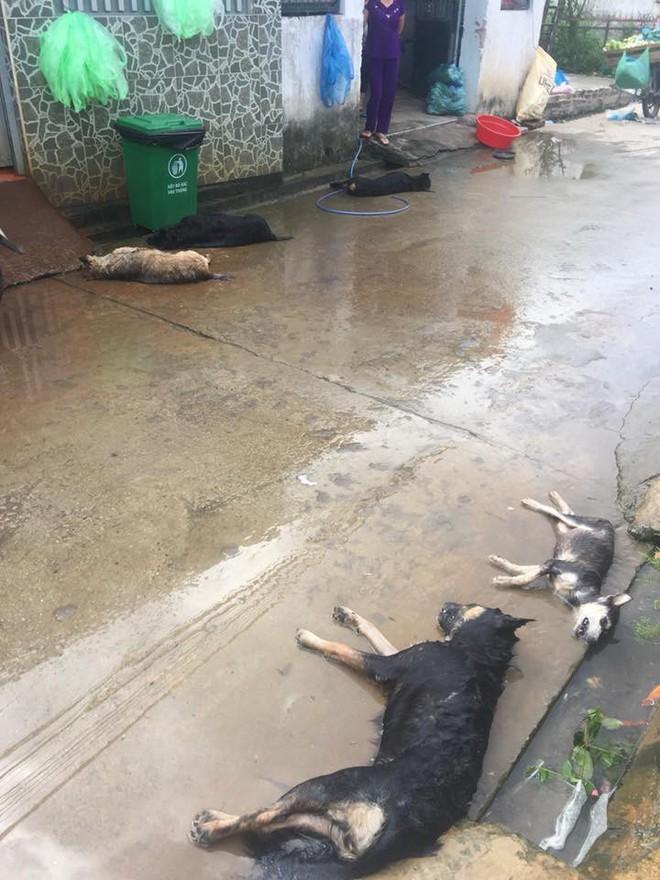 Hình ảnh hàng chục chú chó của cả xóm bị kẻ xấu đánh bả chết trong đêm khiến nhiều người phẫn nộ - Ảnh 2.