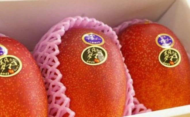 Nhật Bản làm gì để bán 1 quả xoài giá 800.000 đồng?