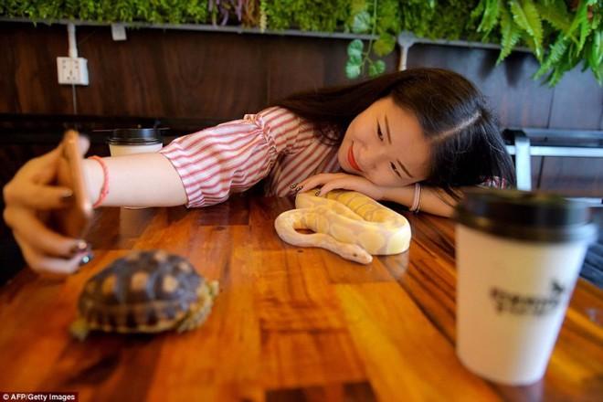 Giới trẻ Campuchia bị hút hồn với quán cà phê bò sát - Ảnh 1.