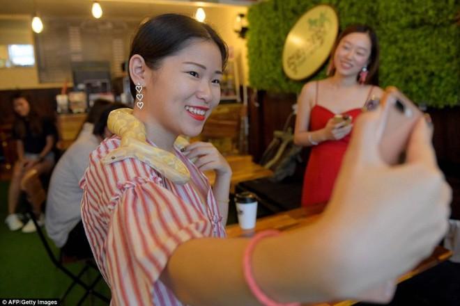 Giới trẻ Campuchia bị hút hồn với quán cà phê bò sát - Ảnh 2.