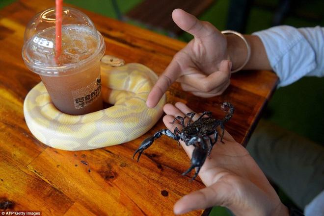 Giới trẻ Campuchia bị hút hồn với quán cà phê bò sát - Ảnh 7.