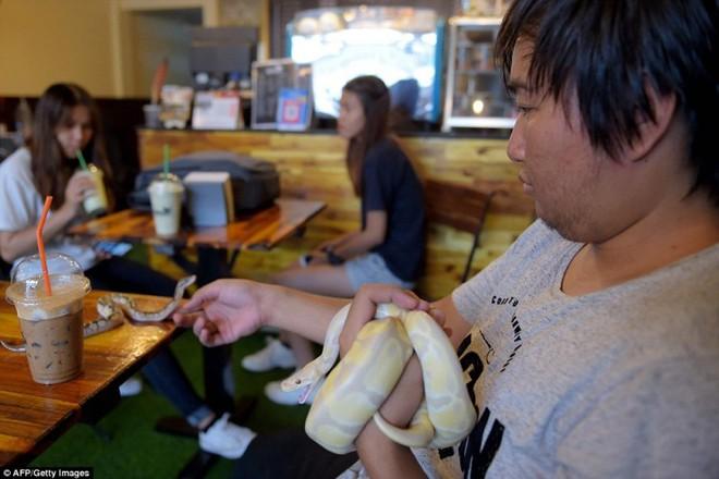 Giới trẻ Campuchia bị hút hồn với quán cà phê bò sát - Ảnh 8.