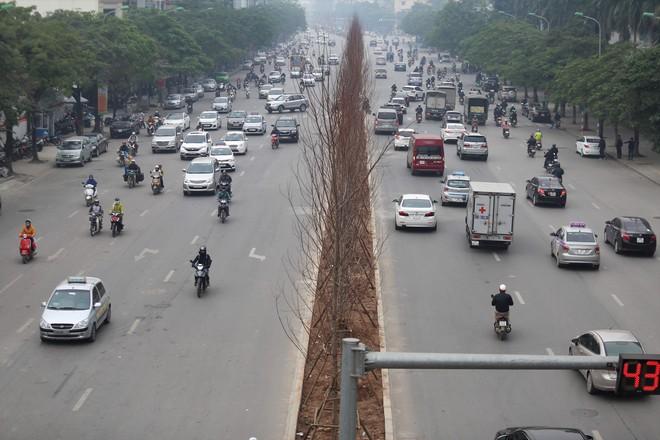 Cận cảnh cây phong lá đỏ mới được trồng trên đường phố Hà Nội - Ảnh 1.