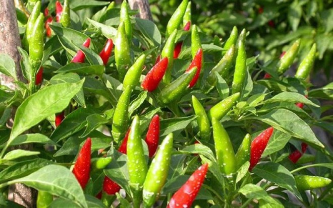 Hàng nông sản Việt Nam được chào bán trên Amazon với giá cao ngất ngưởng - Ảnh 1.