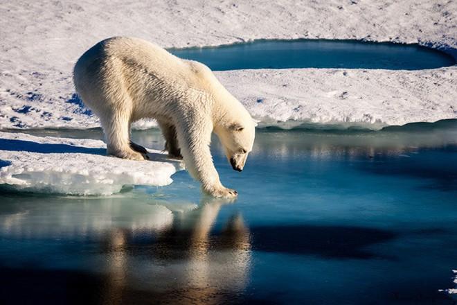 Đúng như Hoàng Thùy trả lời ở HHHV: Chống biến đổi khí hậu là vấn đề cần ưu tiên nhất hiện nay và đây chính là lý do - Ảnh 4.