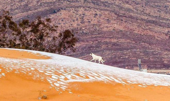 Lý giải hiện tượng tuyết rơi trắng xóa tại... sa mạc Sahara - Ảnh 5.