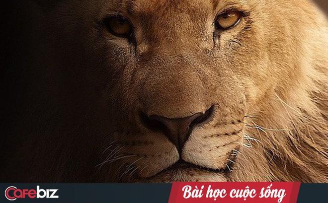 Chuyện sư tử và cáo: Bài học cuộc sống ý nghĩa mà ai đi làm cũng đều nên biết