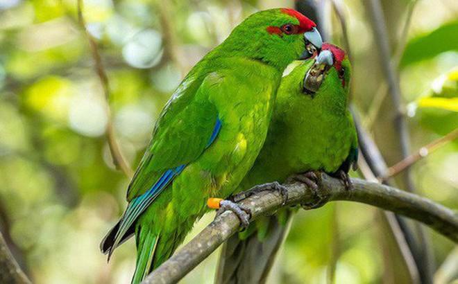 Thiên đường chim hoang dã lộng lẫy bậc nhất chính là hòn đảo này