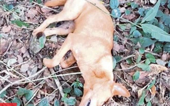 Chú chó hy sinh khi cứu cả gia đình nhà chủ khỏi trăn dài 6m