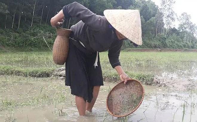 Mùa săn 'đặc sản' nòng nọc ở vùng cao xứ Quảng