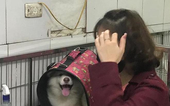 Hà Nội: Đưa chó cưng đi khám, cô gái bị tàu hất văng sang một bên, may mắn thoát chết
