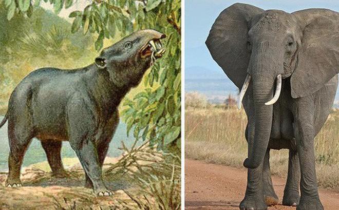 9 loài vật cực quen thuộc này thời xưa lại có ngoại hình dị đến mức không thể tin nổi
