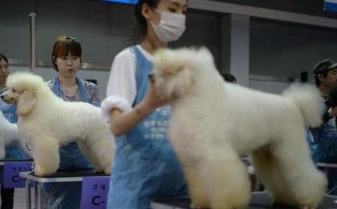 Hàn Quốc thay đổi mạnh thái độ với nghề thịt chó và thói quen ăn chó