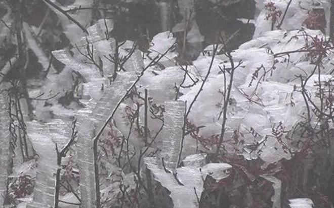 Tết dương lịch miền Bắc rét bậc nhất trong 10 năm, núi cao có mưa tuyết
