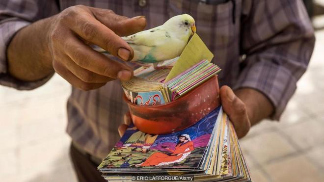Truyền thống bói toán kỳ lạ nhất của người Iran: Bói mọi lúc mọi nơi, vận mệnh đôi khi phụ thuộc vào một con chim - Ảnh 4.