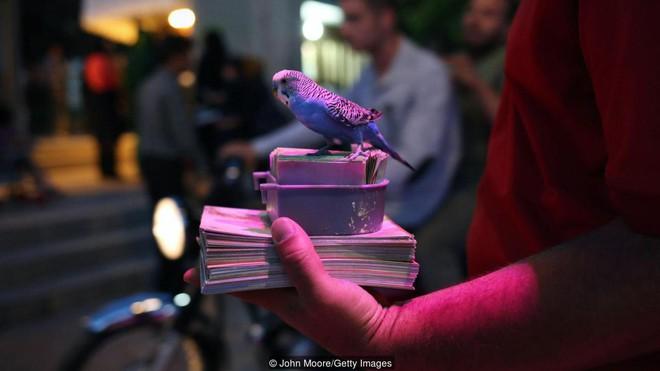 Truyền thống bói toán kỳ lạ nhất của người Iran: Bói mọi lúc mọi nơi, vận mệnh đôi khi phụ thuộc vào một con chim - Ảnh 5.