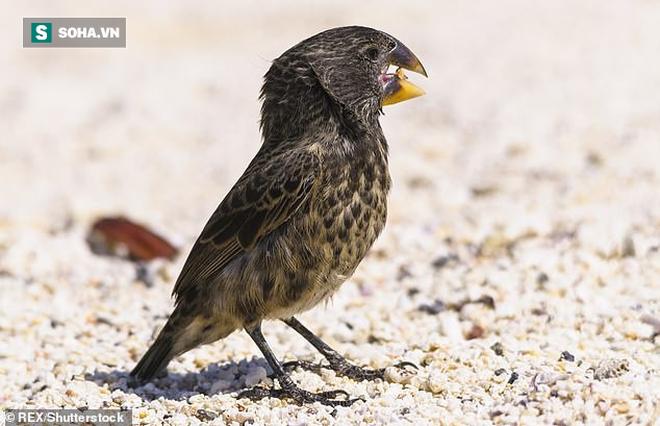 Loài chim nhỏ chỉ nặng 33 gram có lực cắn mạnh gấp 320 lần khủng long bạo chúa - Ảnh 2.
