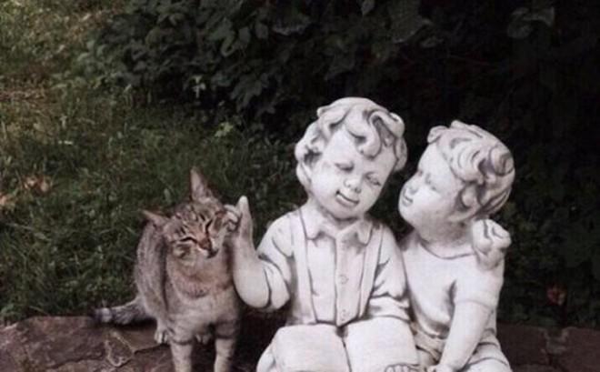 Ảnh: Cười ngất trước những khoảnh khắc siêu hài hước của mèo cưng