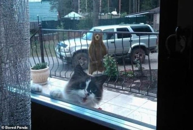 Ảnh: Cười ngất trước những khoảnh khắc siêu hài hước của mèo cưng - Ảnh 6.