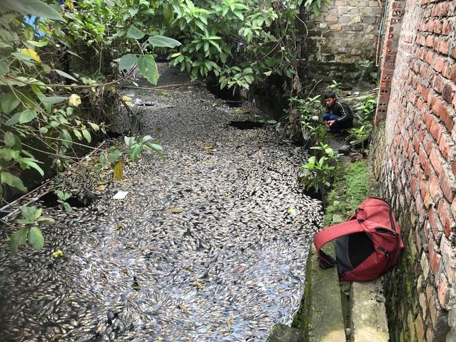 Nước kênh hào Thành cổ Vinh đen như mực, cá chết hàng loạt, dân lo sợ cầu cứu - Ảnh 2.