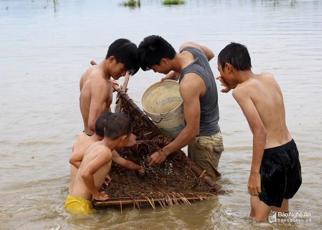 Mục sở thị những kiểu săn cua độc đáo ở Nghệ An - Ảnh 3.