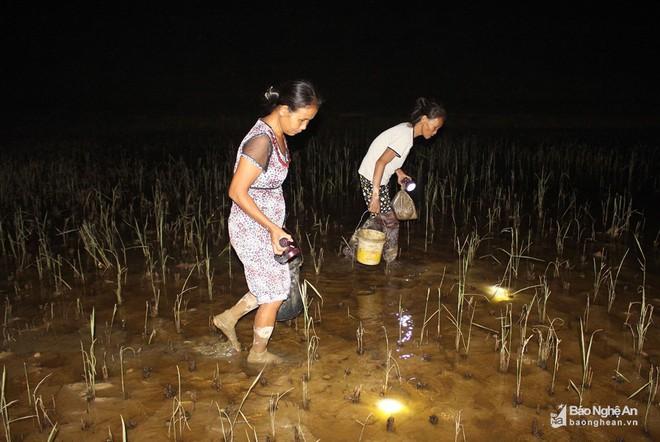 Mục sở thị những kiểu săn cua độc đáo ở Nghệ An - Ảnh 6.